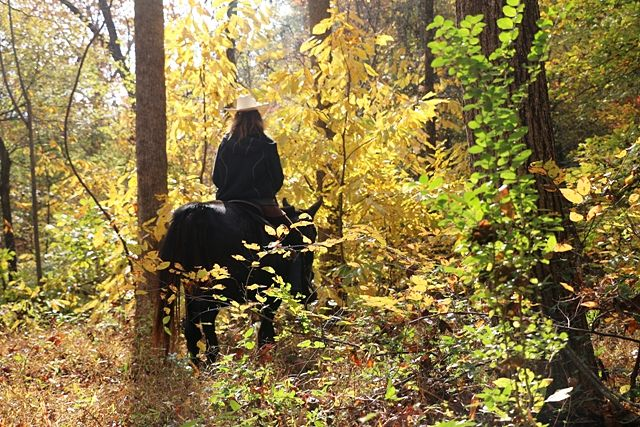 Guest riding a mule on wooded trail at the guest ranch