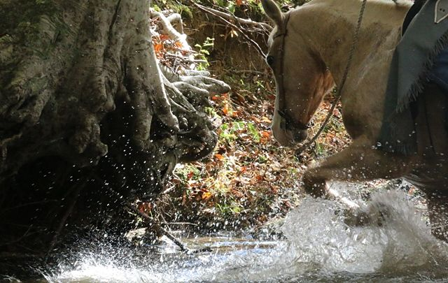 King in the Creek at Shangrila Guest Ranch