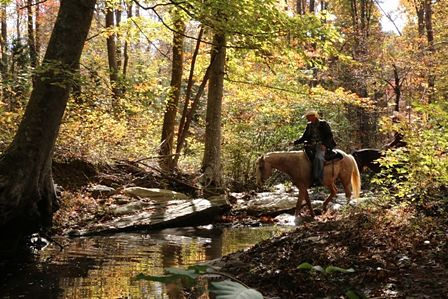 horseback riding across creek