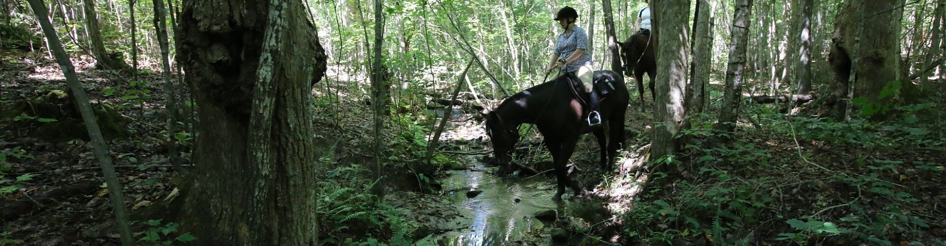Crossing the creek during the trail ride